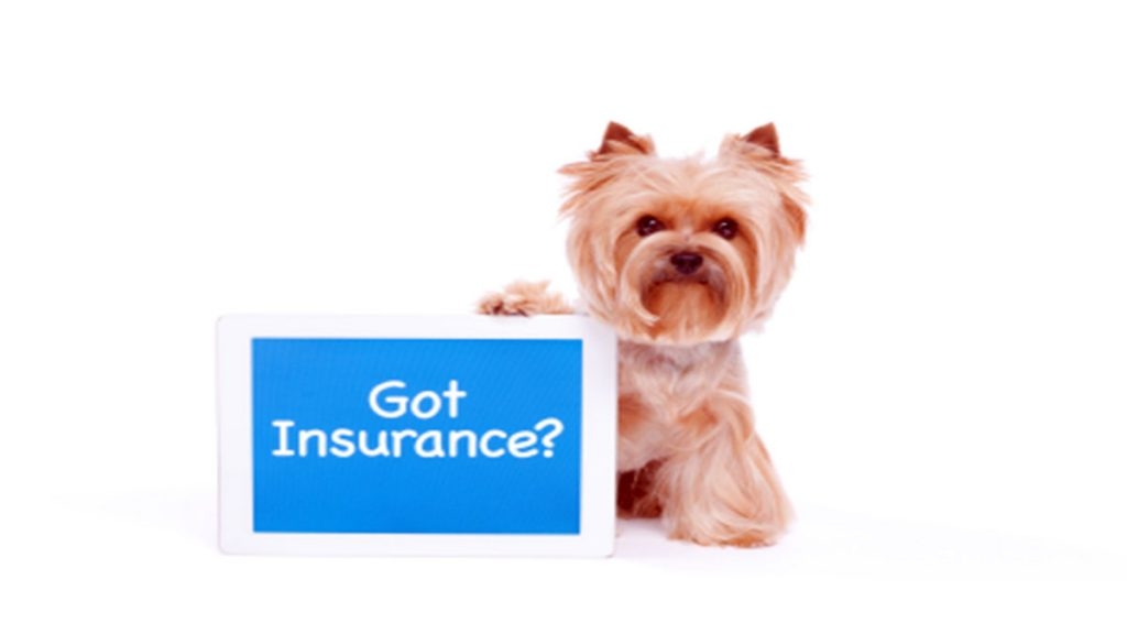 Animal Insurance for dogs