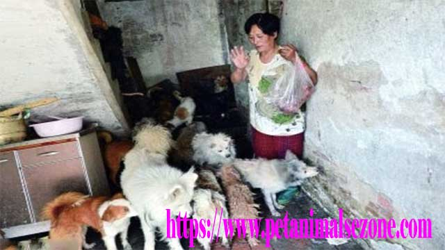 Woman Saves 100 Dogs