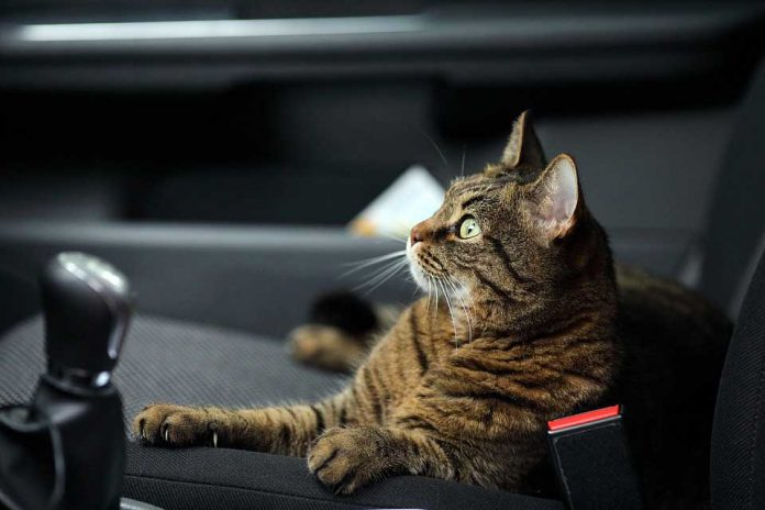 Road Trip with Your Cat