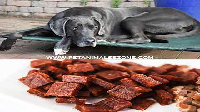 Great Dane dog foods-are great danes proactive