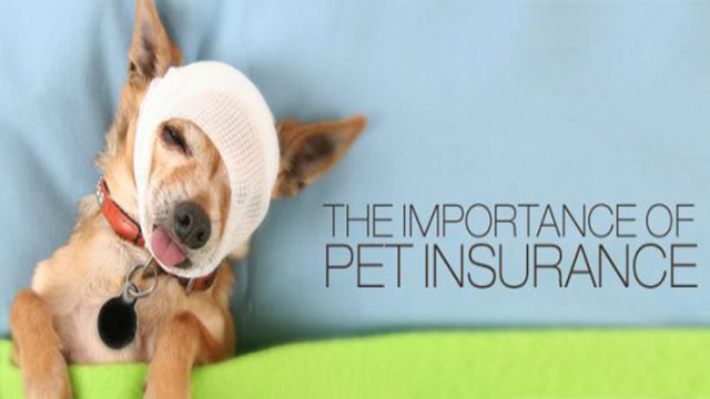Important of Pet Insurance