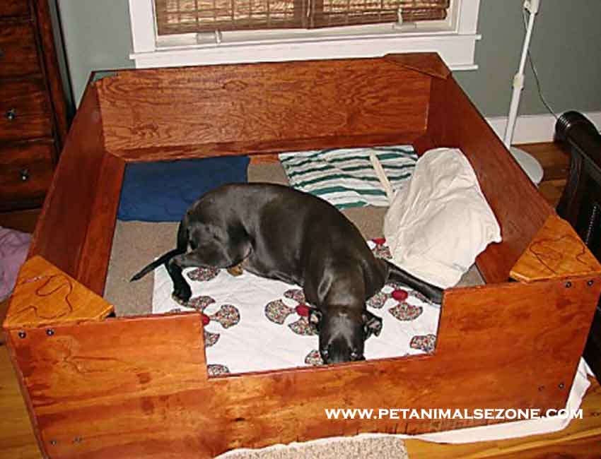sample whelping box for dog pregnancy
