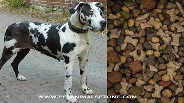 best dry dog foods for great danes