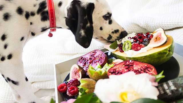 nutritionally complete homemade dog meal recipes