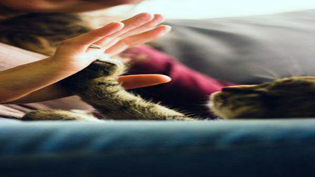 why Cats as pets are awesome