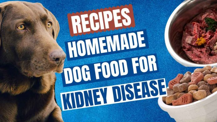 HOMEMADE DOG FOOD RECIPES FOR KIDNEY DISEASE